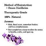Majestic Pure Lavender Essential Oil Therapeutic Grade 4 Fl Oz