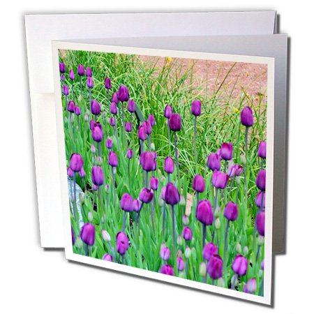 3dRose Tip Toe Through The Tulips Purple Colored - Greeting Cards, 6 x 6