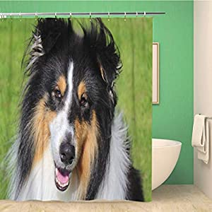 Awowee 72x78 Inches Shower Curtain Brown Adorable Shot of Tri Color Rough Collie Green Waterproof Polyester Fabric Bath Bathroom Curtain Set with Hooks 2