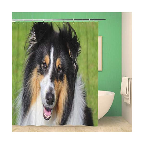 Awowee 72x78 Inches Shower Curtain Brown Adorable Shot of Tri Color Rough Collie Green Waterproof Polyester Fabric Bath Bathroom Curtain Set with Hooks 1