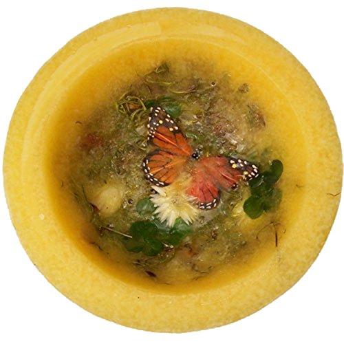 Habersham Butterfly Garden Wax Pottery Vessel