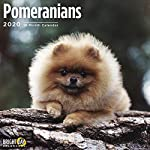 2020 Pomeranians Wall Calendar by Bright Day, 16 Month 12 x 12 Inch, Cute Dogs Puppy Animals Pom-Pom Canine 4