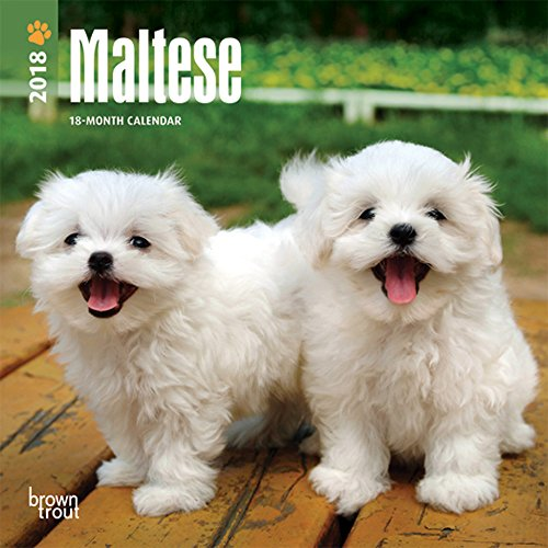 Maltese 2018 7 x 7 Inch Monthly Mini Wall Calendar, Animals Small Dog Breeds Pet (Multilingual Edition)