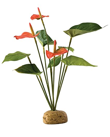 Amazon Com Exo Terra Anthurium Bush Terrarium Plant Pet Habitat