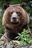 Bear Lovers 2020 Weekly Monthly Planner: With Agenda & Appointments Calendar Schedule, To Do List, Notes & Gratitude | Grizzy Bear Gifts For Men & Women - Nature & Wildlife conservation