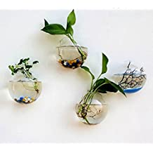 Siyaglass Set of 4 Hanging Wall Decorations Clear Succulent Plant Glass Display Vases