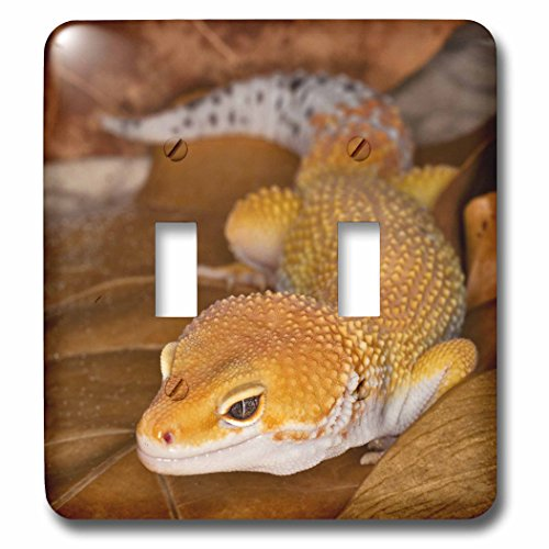 3dRose lsp_73099_2 Leopard Gecko morph, Lizard, PakistanA...