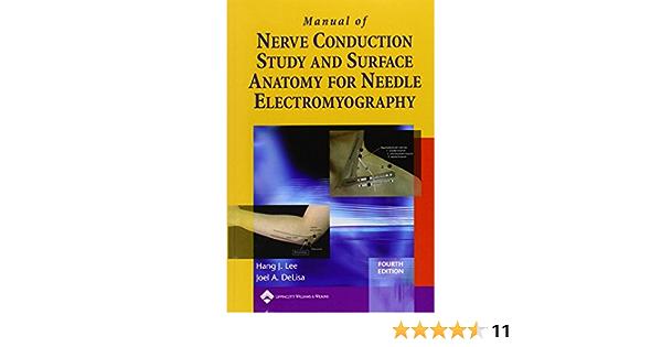 AMONIDA Cervical Spine Model 1 1 Nerves Anatomical Model for ...