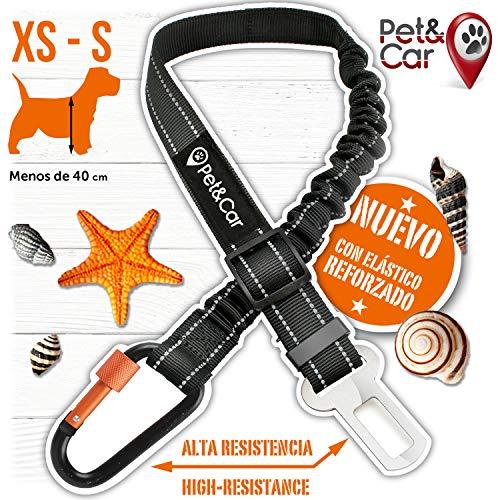 🥇 PET & CAR Cinturón de Seguridad Extensible para arnés de Perro. Previene Lesiones de Mascota pequeña en Coche por su Correa elástica
