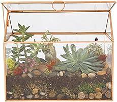 Handling Mold In A Terrarium