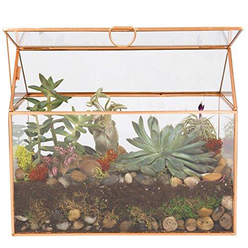 Deco Glass Terrarium, Succulent, Air Plant (Large 9.8