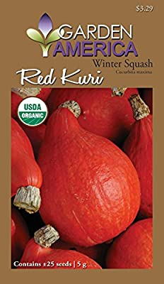 Garden America CUC-0803 Organic Red Kuri Winter Squash Seed