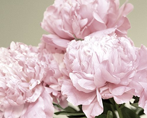 Pink Peony Wall Decor, Fine Art Flower Photography Print, Pale Pink Shabby Chic Wall Decor, Floral Art Print 8x10, 11x14, 12x16, 16x20, 18x24 French Style Cottage Art ()