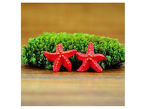 FERFERFERWON Micro Decorazioni di Mini Artigianato Naturale di Stelle Marine per Micro Paesaggio (Rosso) Decorazione del Paesaggio
