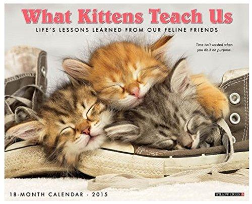 Download What Kittens Teach Us 2015 Wall Calendar pdf epub