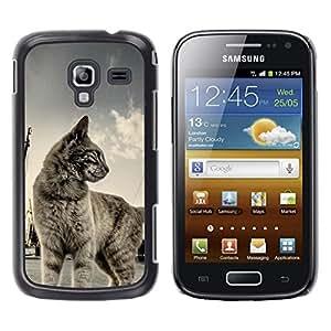 TECHCASE**Cubierta de la caja de protección la piel dura para el ** Samsung Galaxy Ace 2 I8160 Ace II X S7560M ** Cat Shorthair House Pet Blue Grey Cute Kitten