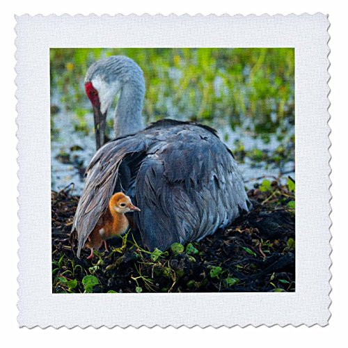 Colt Wing (3D Rose Sandhill Crane on Nest with Colt Under Wing Florida Quilt Square 14 by 14 Inch, 14 x 14