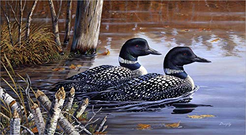 (Beaver Pond Loons by Terry Doughty Laminated Art Print, 29 x 16)