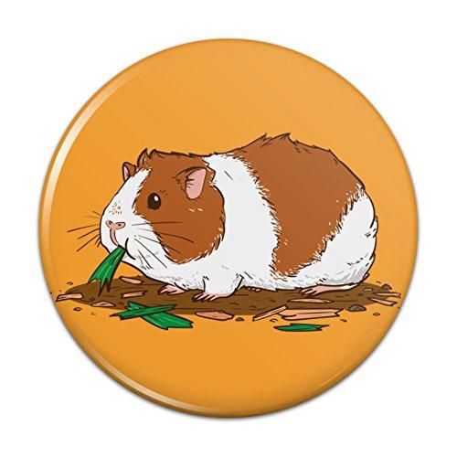 Guinea Pig Eating Pinback Button Pin Badge - 1
