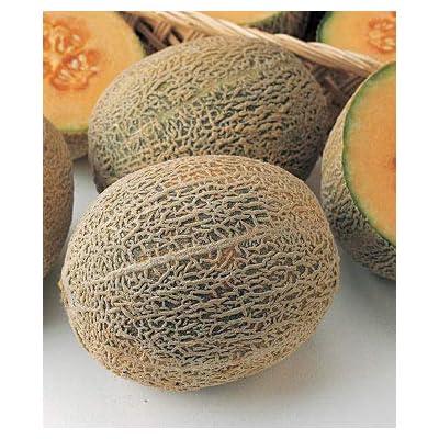 Earth Seeds Co 20 Pcs Melon Seeds 'Honey Bun', Deliciously Sweet Cantaloupe Variety Organic Fruit Seeds Ideal for Smaller Gardens : Garden & Outdoor