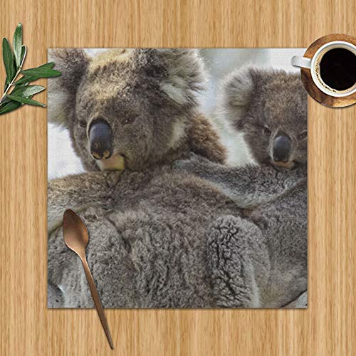 Koala Mother Baby Joey On Back Wildlife Nature Set Of 6 Placemats For Dining Table,Premium Reusable Place Mates,Plastic Placemats,Wipe Clean Placemats,Comic Place Mat,Dining Placemats(12 X 12 Inch) (Back Australia Ideas Patio)