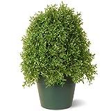 National Tree 15 Inch Boxwood Tree in Dark Green Round Plastic Pot (LBX4-15-1)