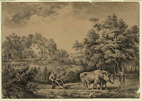 - American farm scenes: No. 1