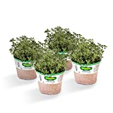 #3: Bonnie Plants Lemon Thyme (4 Pack) Live Plants