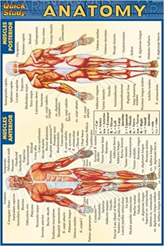 Anatomy Quick Study Anatomy Inc Barcharts 0654614207579