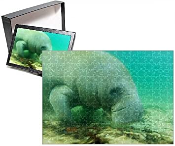 amazon com photo jigsaw puzzle of solitary manatee swimming in the