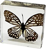 Real Bug BF15 Red Ring Skirt Butterfly Paperweight