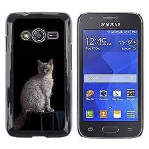 TopCaseStore / la caja del caucho duro de la cubierta de protección de la piel - Laperm Cat Curly Hair Blue Eyes Cat - Samsung Galaxy Ace 4 G313 SM-G313F