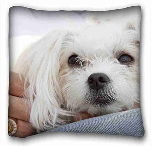 Acelive 20 x 20 Inches Custom Characteristic (Animals Maltese Dogs Puppies lap) Pillow Covers Bedding Accessories Size For Sofa Decorative Square Home Office Indoor Decorative Square