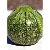TROPICA - Zucchini – Ronde de Nice (Pumpkin seed) (Cucurbita pepo) - 15 Seeds - Vegetable specialities