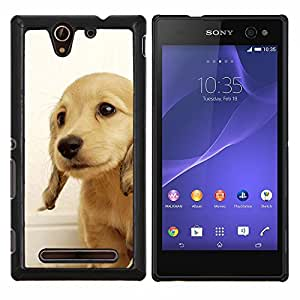 Perrito del golden retriever Perro británica Amarillo- Metal de aluminio y de plástico duro Caja del teléfono - Negro - Sony Xperia C3 D2533 / C3 Dual D2502