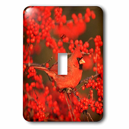 3dRose Danita Delimont - Cardinal - Northern Cardinal male in Common Winterberry Marion, IL - Light Switch Covers - single toggle switch (lsp_250893_1)