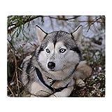 "CafePress - Siberian Husky Throw Blanket - Soft Fleece Throw Blanket, 50""x60"" Stadium Blanket"
