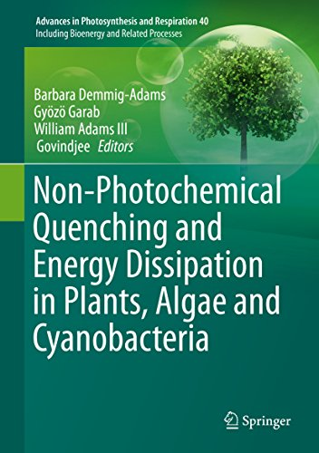 Download Non-Photochemical Quenching and Energy Dissipation in Plants, Algae and Cyanobacteria (Advances in Photosynthesis and Respiration) Pdf