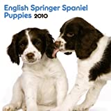 English Springer Spaniel Puppies 2010 Mini Wall