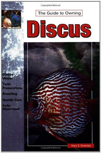 Discus (Best Discus Fish In The World)