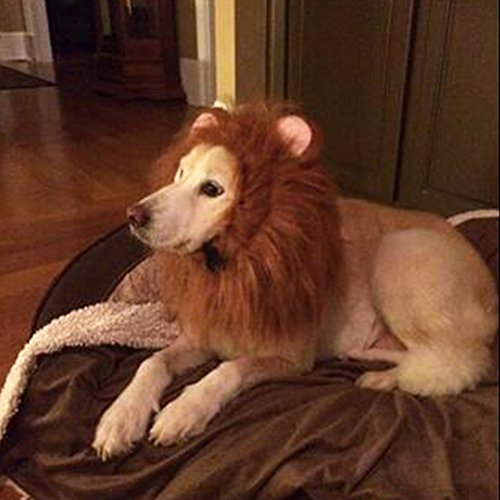 Wotefusi Pet Costume Lion Mane Wig Hair Clothes Festival Fancy Dress up with Ears Tail -