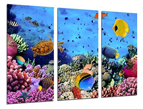 Cuadro Fotografico Paisaje Bajo el Mar, Peces Acuario Tamano total 97 x 62 cm XXL