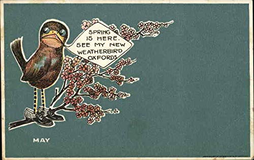 Vintage Advertising Postcard: Weatherbird Oxfords St. Louis, Missouri from CardCow Vintage Postcards