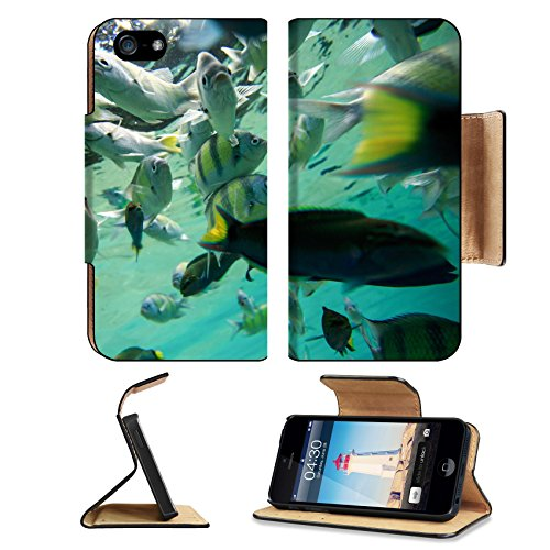 Cozumel 5 Light (Luxlady Premium Apple iPhone 5 iphone 5S Flip Pu Leather Wallet Case iPhone5 IMAGE ID: 24461919 Colorful of fishes with ripples of sunlight reflected on the ocean floor)