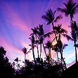 Tropical Palm Tree Sunset Picture, Coastal Beach Decor Wall Art