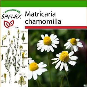 SAFLAX - Manzanilla común - 300 semillas - Con sustrato - Matricaria chamomilla