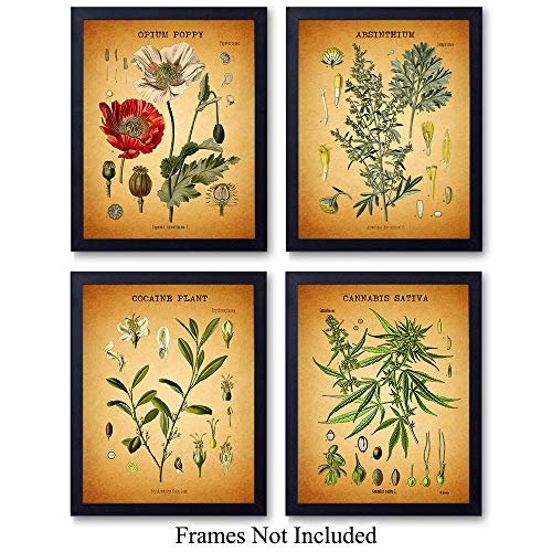 Medicinal Drug Plants Wall Art Prints - Set of Four (8X10) Vintage Unframed Photos - Makes a Great Gift For Pot Smokers, Man Cave or Bars