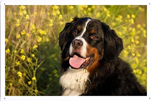 - World Animal Poster - Bernese Mountain Dog 692 Tin Sign 8