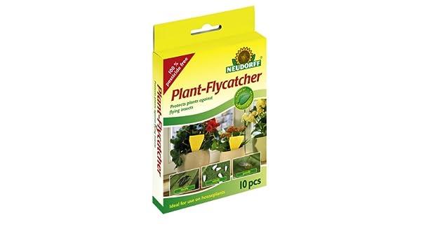 Neudorff 613624 - Atrapamoscas para plantas, paquete de 10 unidades: Amazon.es: Jardín