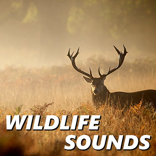 Wild Coyote Sounds - Soundboardcom - Create Download